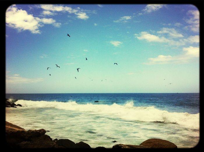 Beach Pelicans Waves Mar #Venezuela