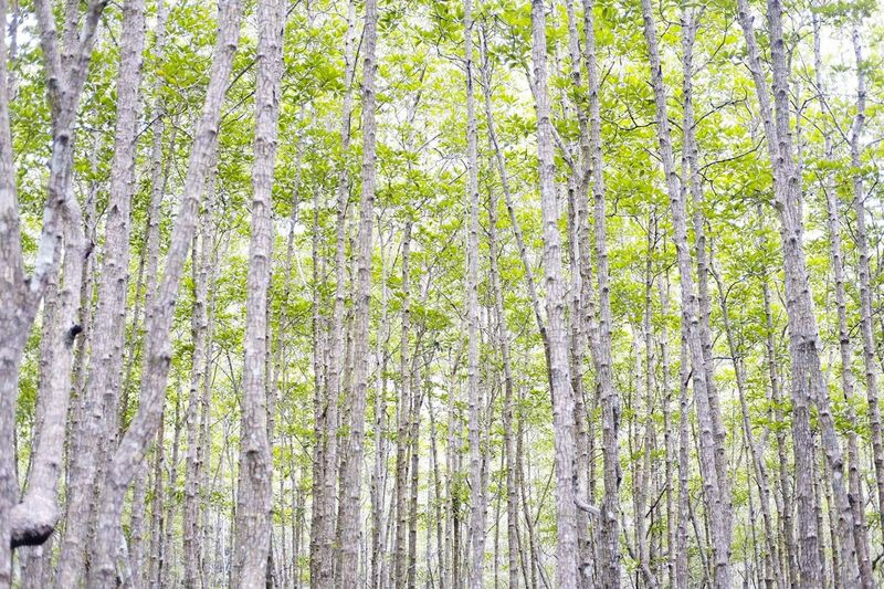 Full frame shot of trees growing in forest