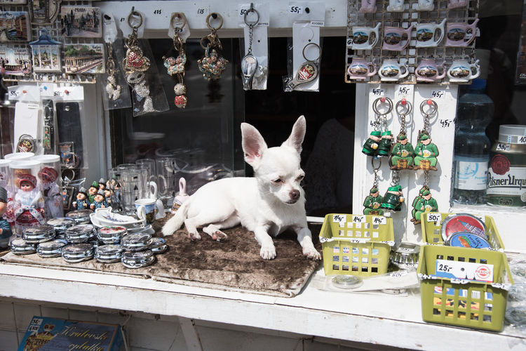 Dog Service