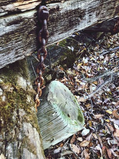 Rusty chain Old Log Rusty Chain Day Nature No People High Angle View Water Plant Outdoors Tree Sunlight Textured  Land Plant Part Leaf Solid Moss Falling Metal