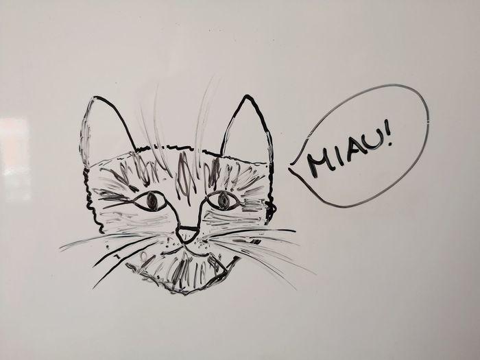 Cat Paper Ink