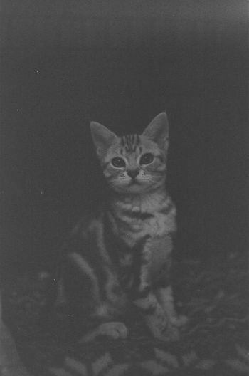 Mylove Mylittlefriend Cat Cats Film Monochrome Black&white Blackandwhite