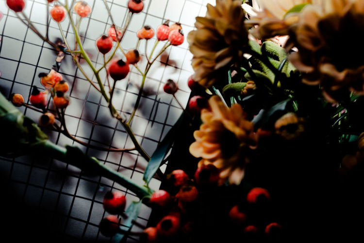 Beauty In Nature Berry Fruit Close-up Colors Day Flower Food And Drink Fragility Freshness Fruit Growth Nature No People Outdoors Plant Rowanberry Sky Tree