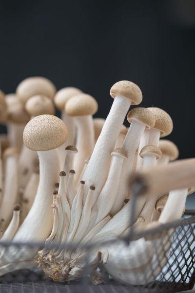 Buna Shimeji Mushroom Close-up Food Freshness Fungus Growth Healthy Eating Indoors  Mushroom No People Raw Food Shimeji Mushrooms