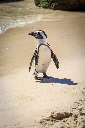 Bird on sand at beach