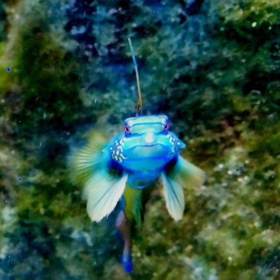 Fish Aquarium Water Fishface Fisch Fischauge Farbenfroh Aquariumfish Aquariumlife Aquarium Life