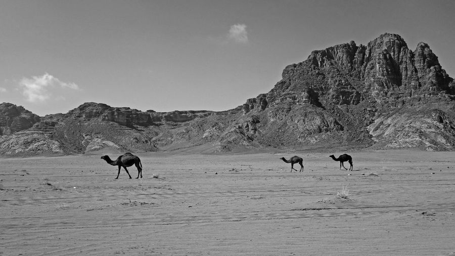 Deserts Around