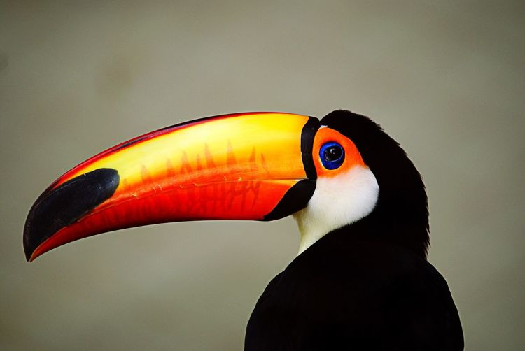 Close-up of hornbill against wall