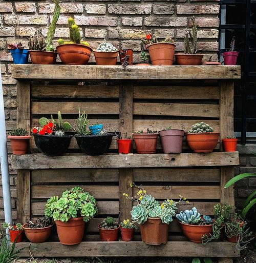 Potted Plant Arrangement Shelf Choice No People For Sale Variation Day Growth Flower Pot Large Group Of Objects Plant Retail  Shelves Multi Colored Container Decoration Outdoors Side By Side Store
