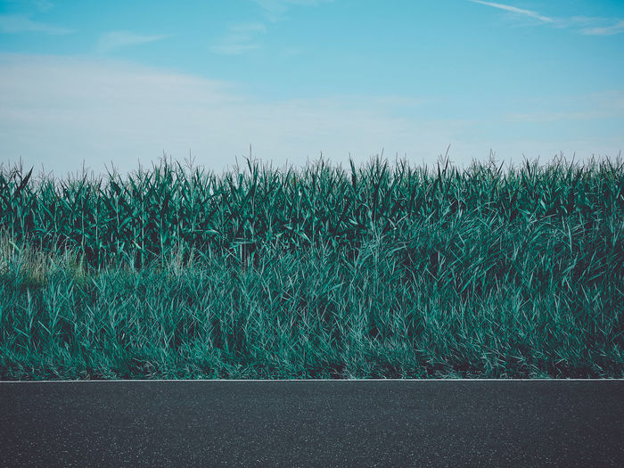 Plants Growing On Field By Road Against Sky