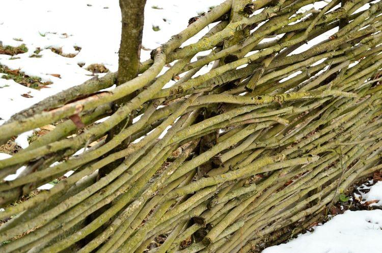 Woven Wicker Rail Fence Branch Winter Snow