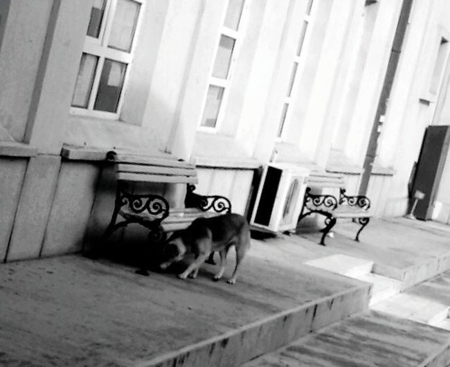 University Dog In Shade Dogs Only Trust What They Smell Che Fontana Phoneography