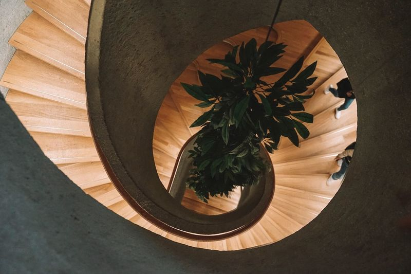 Spiral Spiral Staircase Architecture Hong Kong HongKong EyeEm Selects EyeEm EyeEm Best Shots EyeEmNewHere EyeEm Nature Lover EyeEm Gallery Sunlight Plant High Angle View Shadow Nature Food Herb Table Indoors  No People Leaf Food And Drink Directly Above Plant Part Still Life Day Wood - Material Close-up Freshness