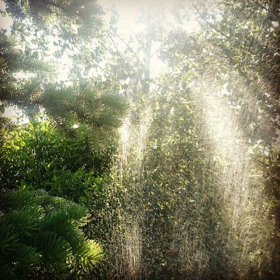 Dziendobry Czerwiec Prawie Lato Słońce Woda Deszcz Przyroda Goodmorning June Nature Spring Almostsummer Tress Sun Rain Water Beautifulefect Instaday Instanature Instainspiration Instaphoto 🌲🌳🌱🌿🌞💧☔