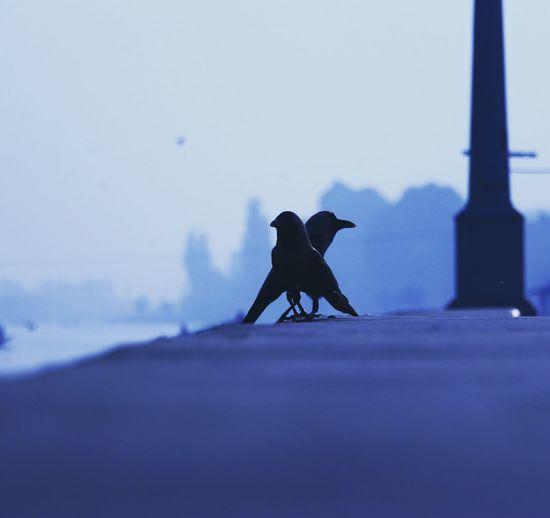 Silhouette bird perching against clear sky