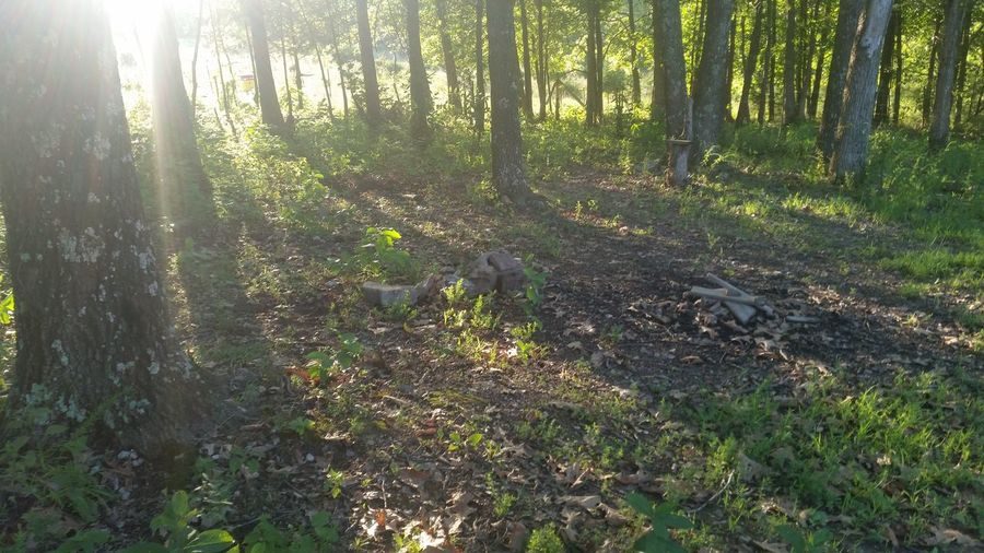 Missouri Ozarks United States Calming Peaceful Forest Nature Tree Sunlight Tree Trunk Outdoors Lens Flare No People WoodLand Day Scenics Beauty In Nature Leaf Growth Landscape Plant Grass Tranquility Tree Area