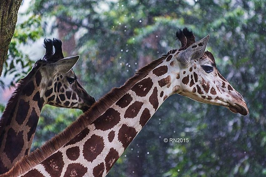 Traveling Travel Photography Nature Photography Photooftheday Animal Love Animal Photography Animals Hello World Check This Out Nature