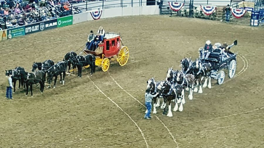 Day Adults Only People Crowd National Western Stock Show Cowboys Stage Coach Wagons Old West