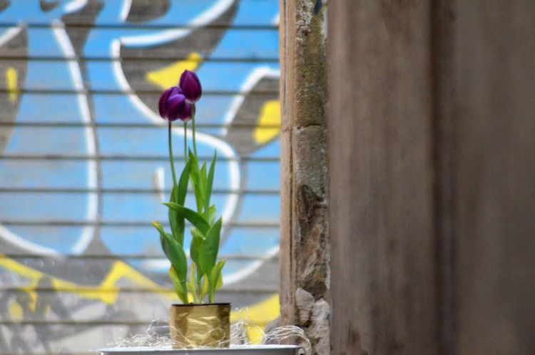 Streetphotography EyeEm EyeEm Gallery EyeEm Nature Lover Flower Vase Plant Beauty In Nature Nature Fragility Petal Day No People Freshness Blooming Flower Head Close-up Orchid