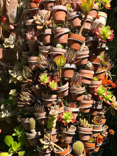 Jardin miniature d'un facteur Cheval local For Sale Choice Retail  Large Group Of Objects Variation Arrangement Abundance Market No People Collection Retail Display Shopping Sale In A Row Small Business Art And Craft Market Stall Plant Day Multi Colored Order Flower Pot