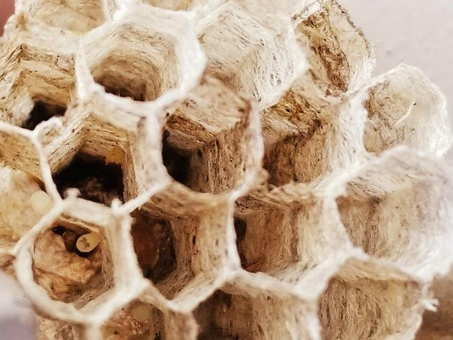 Wasp nest No People Day Outdoors Nature Close-up Wasp Nest Wasps🐝 Rough Textured  Pattern Textures And Surfaces Place Of Heart
