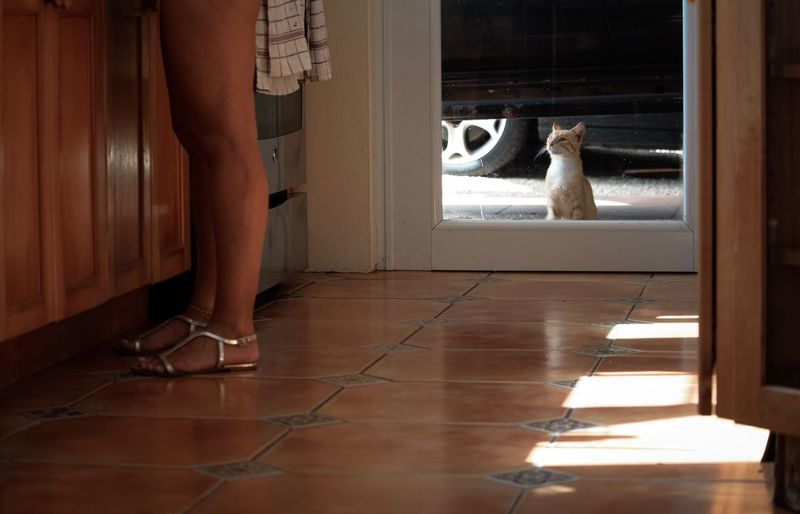 Feline Cat Low Section Domestic Animals Human Leg Domestic Mammal Pets Indoors  Pet Owner Real People One Animal Lifestyles