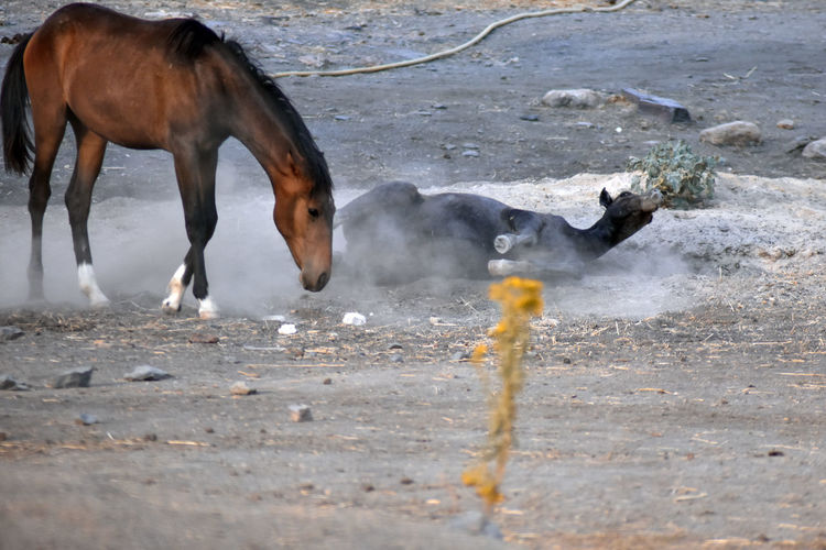 Horses in the ground