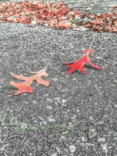 ..Autumn Steps.. Autumn AutumnSteps Autumn Leaves Autumn Colors Nature Photography EyeEm Nature Lover Taking Photos Photoart Art