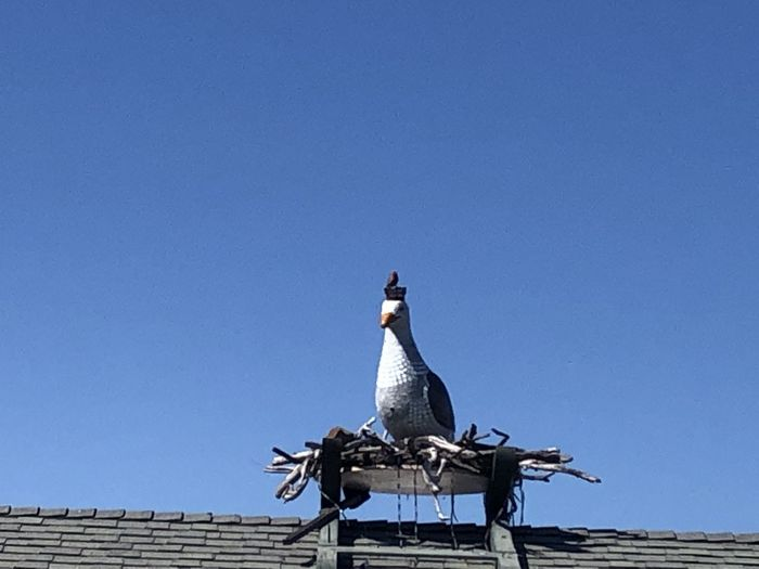 Low angle view of seagull perching on wall against clear blue sky
