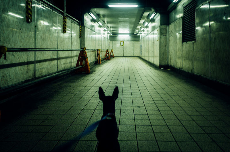 Rear View Of Dog In Illuminated Underground Tunnel