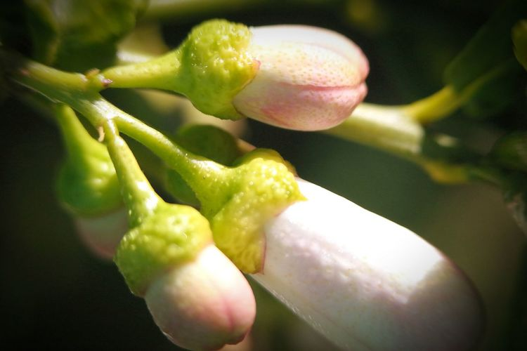 Close up of fresh green plant