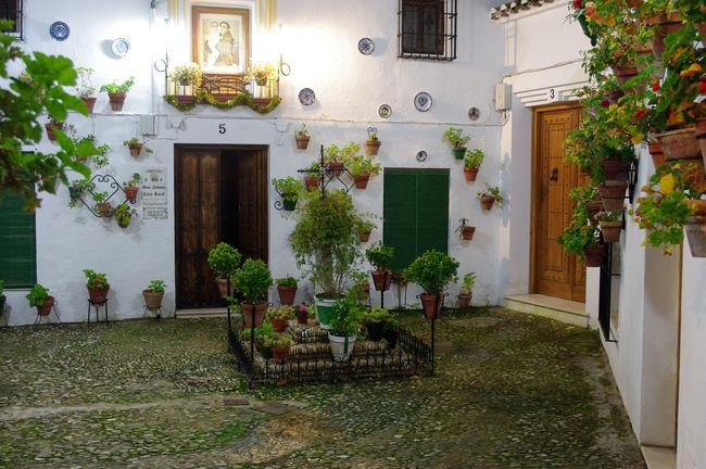 Andalusia Architecture Building Exterior Built Structure Door Growth House Nature Night No People Outdoors Patio Patios De Córdoba Plant Potted Plant Priego De Cordoba SPAIN