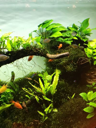 Aquascape Plant Growth Green Color Nature Leaf Water Plant Part First Eyeem Photo