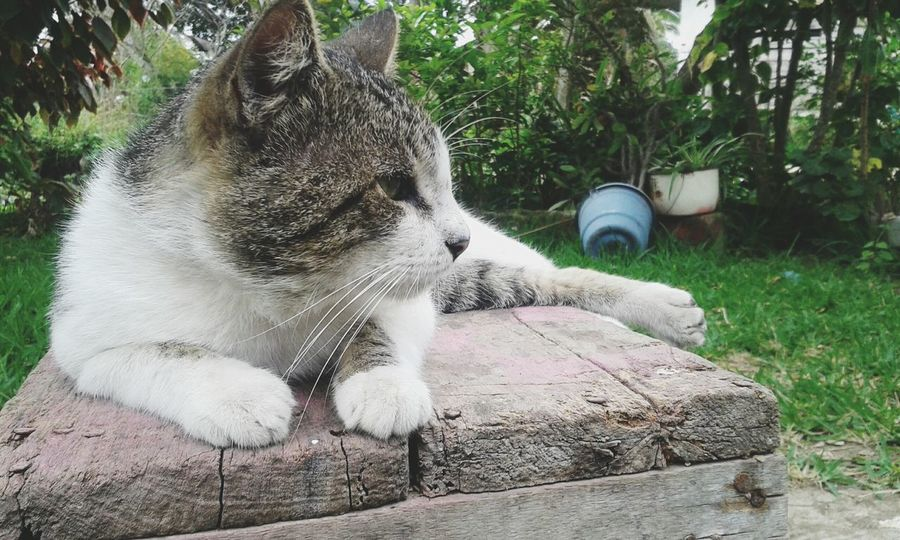 Things I Like Cat Catsagram Cats Pets Sun EyeEmNewHere