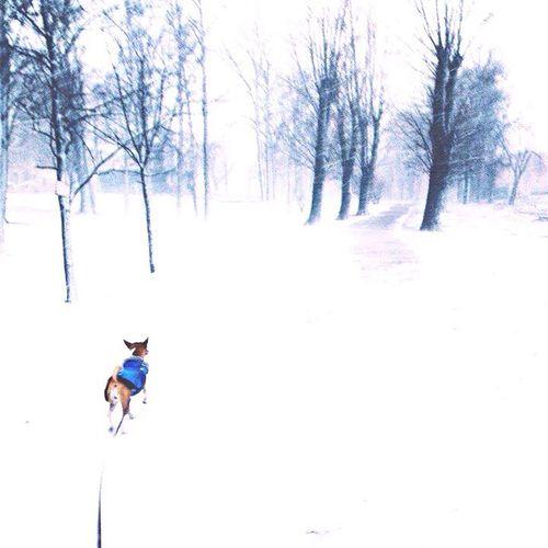 • Fearless Flicka • Basenji Dog Winter Storm Spb