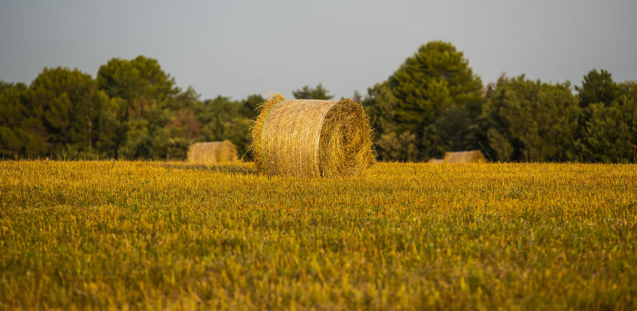 Agriculture Bale  Beauty In Nature Crop  Day Environment Farm Field Growth Hay Land Landscape Nature No People Outdoors Plant Plantation Rural Scene Scenics - Nature Tranquil Scene Tranquility Tree