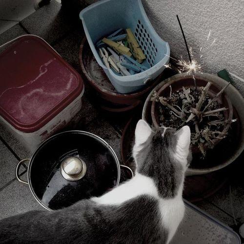 Silvester Cat
