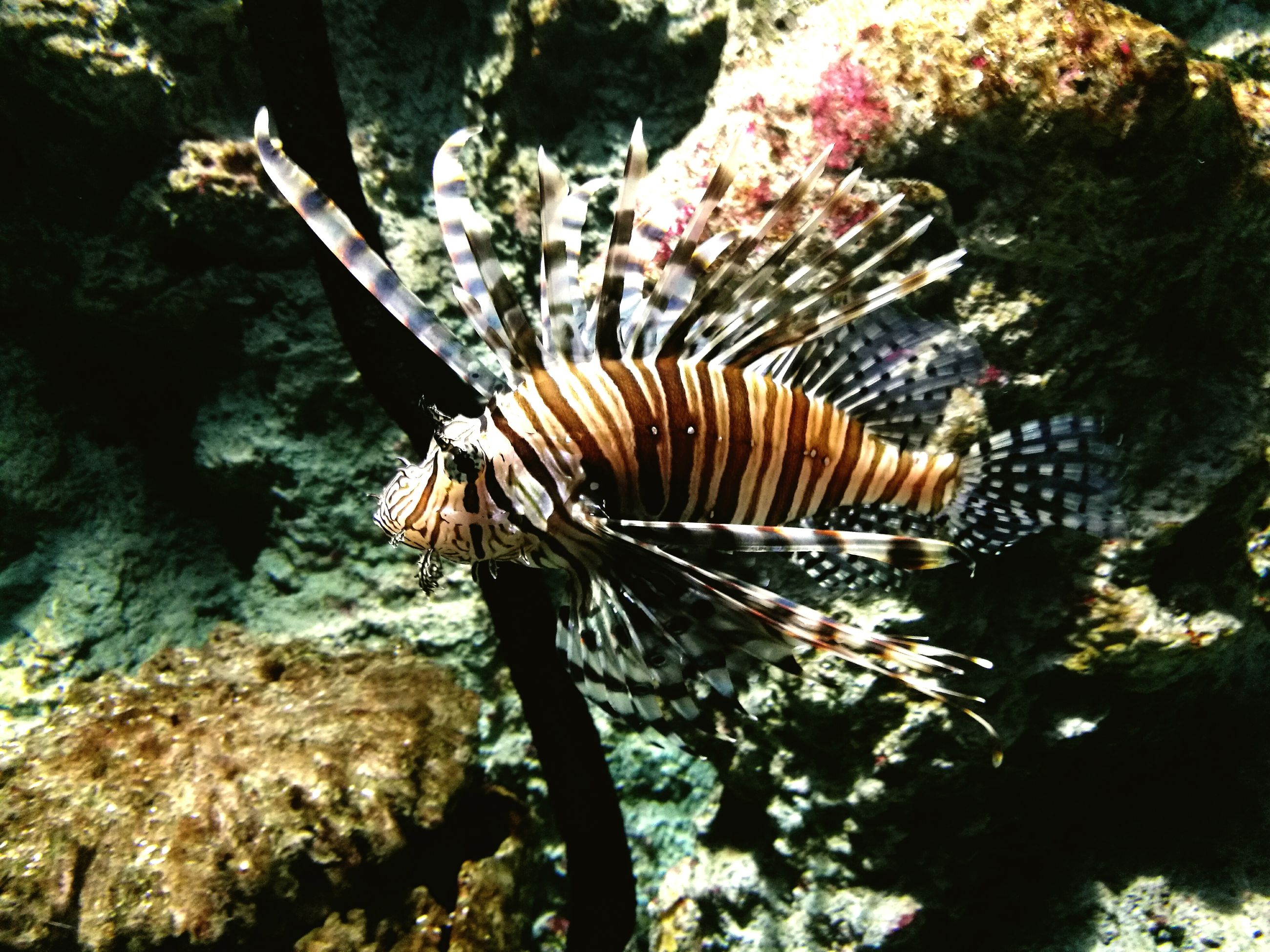 animal themes, one animal, animals in the wild, no people, nature, outdoors, insect, day, close-up, sea life, undersea