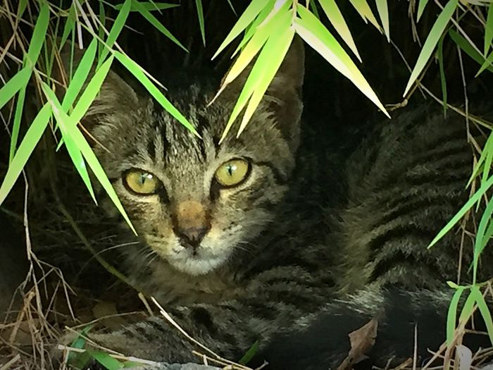 Cat Wild Cat Green Mauritius Holiday Nature Missing My Cat