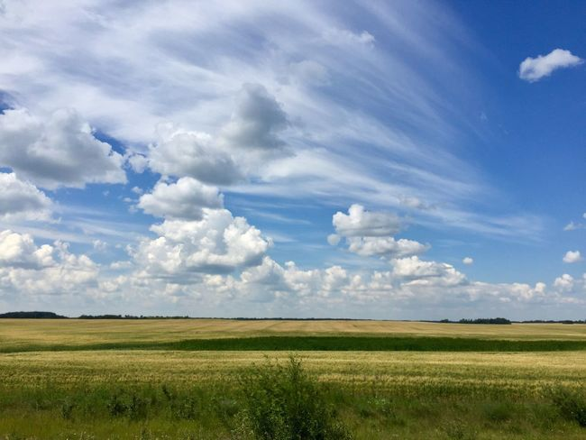 The Week On EyeEm Field Landscape Nature Agriculture Sky Beauty In Nature Scenics Tranquil Scene Tranquility Day Cloud - Sky No People Growth Outdoors Rural Scene Grass No Filter
