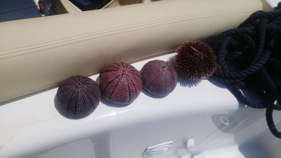 sea urchins Sea Urchin Sea Urchins Sea Urchin Shells Sea Urchin Shells Boat Vibrant Color Row Rows Of Things Beauty In Nature Croatia Croatiafulloflife Croatia_photography Spikes Stiching Croatia Croatia_photography Croatiafulloflife Animal Photography Delicate Beauty Close-up Fragility