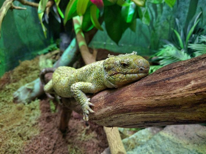 Close-up of lizard on tree trunk at columbus zoo and aquarium