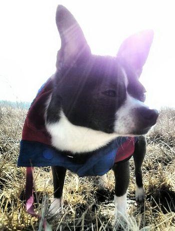 Superdog Superhund