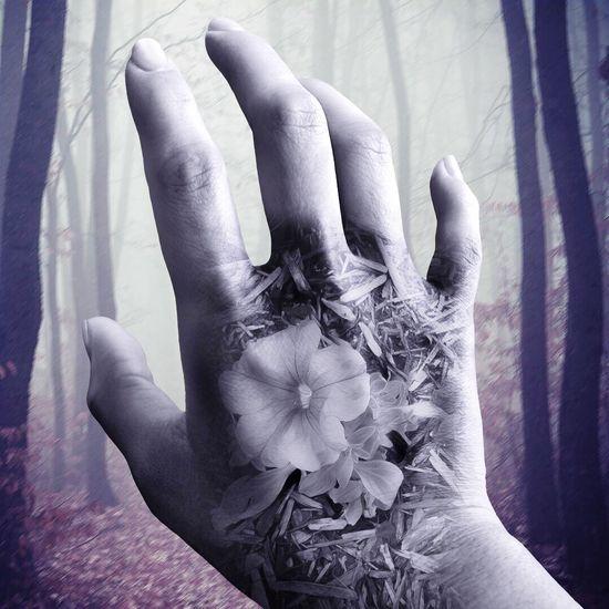 EyeEm Selects Photo Editing Photolab Photolabapp Photolabpro Photoeffects Human Body Part Human Hand Flower Blooming Beauty In Nature Nature Flowers EyeEm Selects