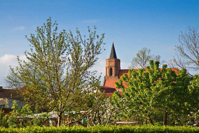 Church in Beeskow, Germany. Architecture Beeskow Bell Tower Blue Building Exterior Built Structure Church City Contrasts Day Green Green Color Growth Landmark Medieval No People Outdoors Place Of Worship Scenics Sky Spire  Tower Tranquil Scene Tranquility Tree