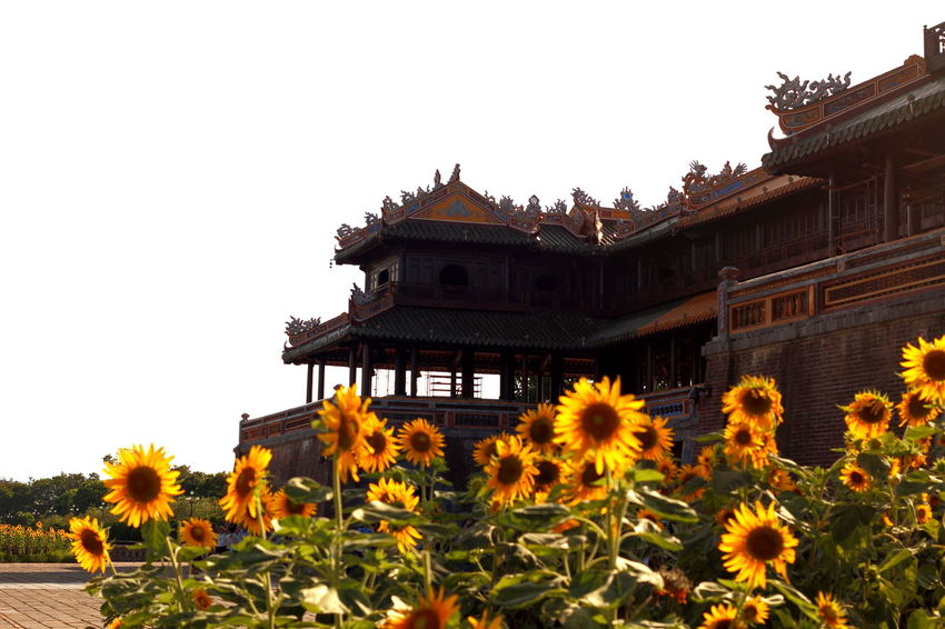 Imperial Citadel, Hue, Viet Nam Architecture EyeEm Best Shots Flowers Huế Imperial Palace Indochine Outdoors Ruins Sunflower Temple - Building Tourist Attraction  Travel Travel Destinations Vietnam