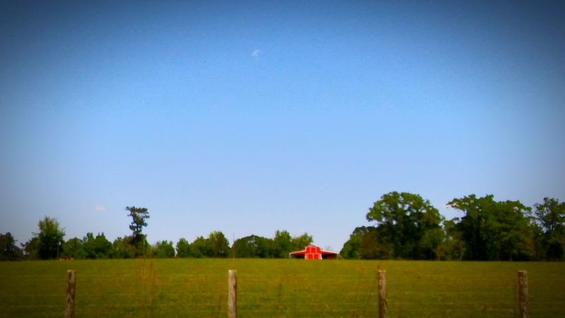 RedBarn_Photography Redbarn Country Life Country Living Rural Scene Nature Landscape Farm Field Grass Growth Day Sky Outdoors Beauty In Nature No People EyeEmBestShot's Fulllength Eyeembestshot_landscape EyeEm Best Shots EyeEm Nature Lover