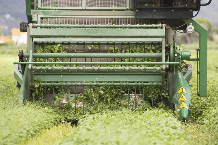 Basil Basilico Farm Farming Farming Vehicles Field Food Green Color Harvest Harvesting Italian Nature Outdoors Pesto Sauce Plant Vegetable
