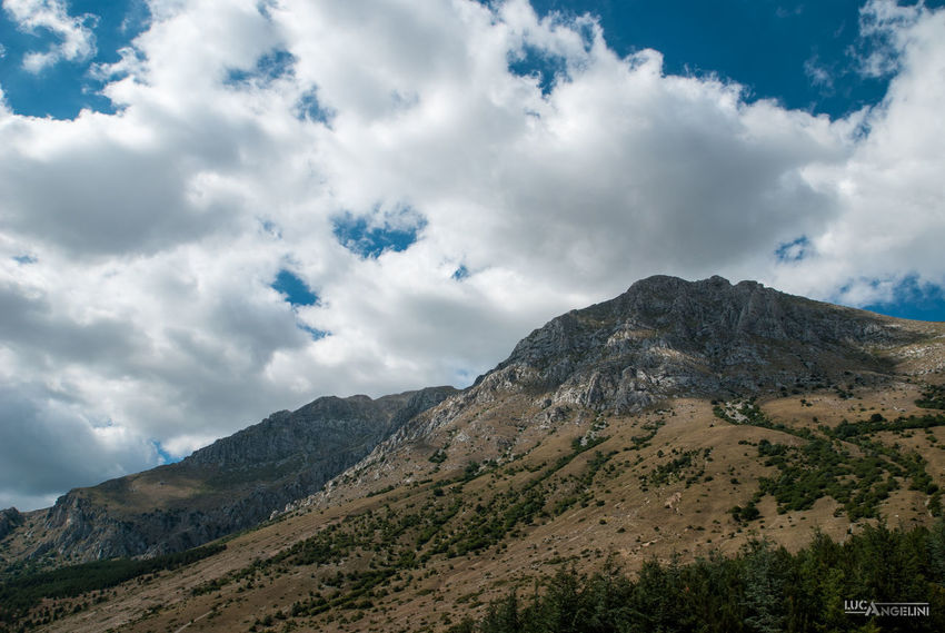 The big giant! Cardo Ciel Clouds Cows Landscape Mountain Mucche Nature Outdoors Sky Thistle Velino Sirente