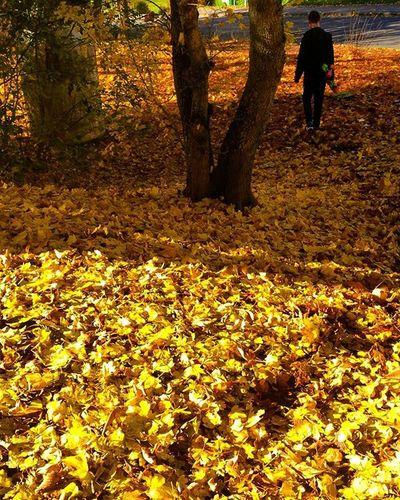 Letzter Tag des Goldenen Oktobers. October Goldenoctober Autumn Fall Yellow Orange Trees Photography Vscocam